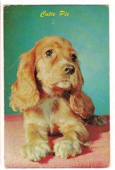 CUTIE PIE Cocker Spaniel BUFF Dog POSTCARD Vintage FREE SHIPPING!   eBay  $2.99