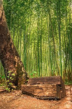 Hey, I found this really awesome Etsy listing at https://www.etsy.com/listing/554787699/bamboo-grove-print-fengshui-bamboo