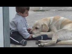 Haciéndose amigos!No hay nada más hermoso que la estimulación canina hacia una persona con necesidades especiales ella encarna el amor verdadero de ambos seres vivos.