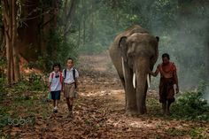 Students with their elephant walking go to school. - Asian students with their father walking go to school with their elephant.