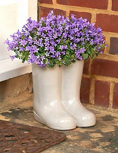 Bring some fun to your garden with these novel terracotta wellington boots filled with gorgeous blue campanula.