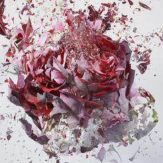 """Martin Klimas - """"Rapid Bloom"""" - Flores mergulhadas em nitrogênio e fotografadas no momento de explosão"""
