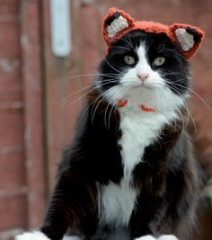 Free crochet pattern--Cats In Hats - Feline Fox A crafty hat for your cunning cat. Chickens beware.