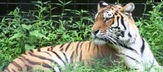 Brandywine Zoo, $5-7 (May 1-Sept. 30), after Oct 1, $3-5