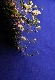 Majorelle Gardens, Marrakesh one of the most beautiful places on earth :-)