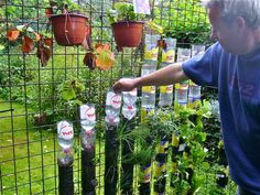 Build a Vertical Garden with Recycled Plastic Bottles. Great for the space-starved garden!