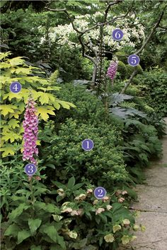 Breaking the Rules: Plant Identification - FineGardening