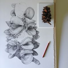 If it's too hard to draw then just skip doing it. I'm sure nobody will notice that huge chunks of banksia are missing. Vintage Botanical Prints, Botanical Drawings, Botanical Art, Plant Illustration, Botanical Illustration, Seed Art, Diy Garden Projects, Garden Ideas, Art Diary