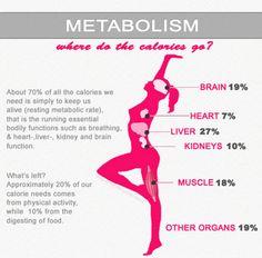 Metabolism: Where do the calories go?