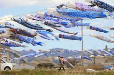 Some 370 blue-coloured carp streamers fly at the tsunami-devastated city of Higashimatsushima, Miyagi prefecture on May 3, 2013. People hoist the blue-coloured carp streamers, symbol of child carp streamer, to mourn children who died in the March 11, 2011 tsunami disaster in the city.      [Credit : Jiji Press/AFP/Getty Images]