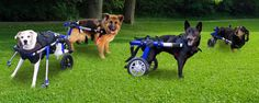 Dog Wheelchairs, Products, Services and Support for Handicapped Pets