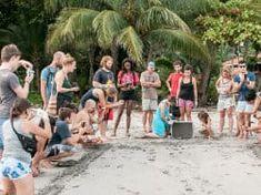 Volunteer Sea Turtles opportunities in Costa Rica Conservation Program