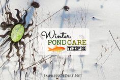 How to prepare a small garden pond for the winter and keep your fish and plants alive and happy.
