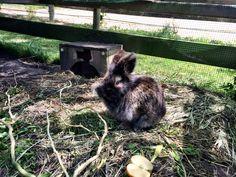Orly in de tuin