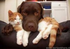 Image result for images of dogs and cats together