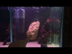 'Invisible' Aquarium filter - Awesome internal fish tank filter by Pondguru Diy Aquarium, Saltwater Aquarium, Freshwater Aquarium, Aquarium Ideas, Betta Tank Mates, Turtle Habitat, Aquatic Turtles, Aquarium Accessories, Diy Pond