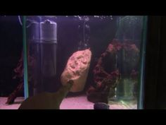'Invisible' Aquarium filter - Awesome internal fish tank filter by Pondguru
