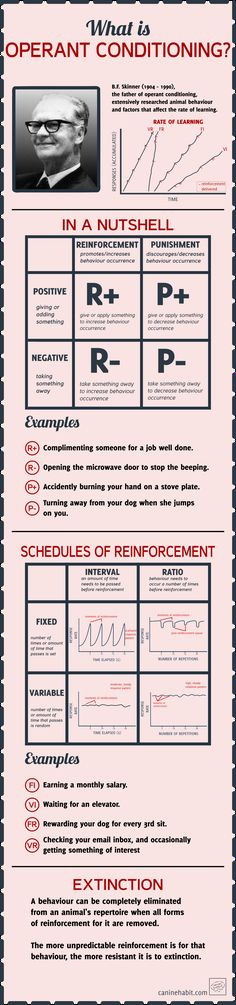 [INFOGRAPHIC] What is operant conditioning?