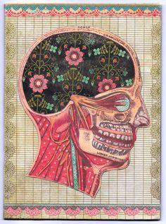 anatomy of the head (Audrey Smith)