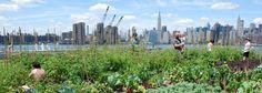 UN AGRICULTEUR URBAIN CANADIEN CULTIVE 22700 KG DE NOURRITURE AVEC MOINS D'UN DEMI-HECTARE DE TERRAIN Imaginez à quoi ressembleraient nos villes