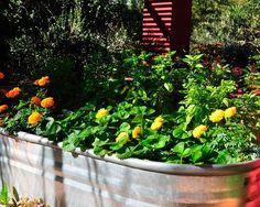Cow Trough Kitchen Garden (basil, strawberries) | Summer Vegetable Gardening in the South by @Diane Haan Lohmeyer Z Nash | jardin potager | bauerngarten | köksträdgård