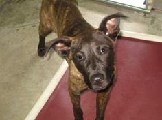 Shawn: Only 5 months old and out of time at high-kill upstate shelter ADOPTED