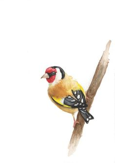 ARTFINDER: Goldfinch by Gareth Hughes - Goldfinch as you know and love it.
