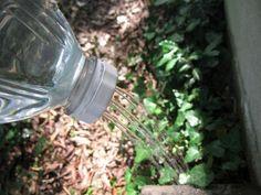 Pet şişe sanatı / 20 - Foto Haber Galeri