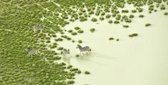 Featured Image for Wow! Botswana looks wonderful as abstract art from a bird's eye view