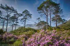 Table Mountain in spring Spring Scenery, Table Mountain, Cape Town, South Africa, Beautiful Places, Landscapes, African, Spaces, Plants