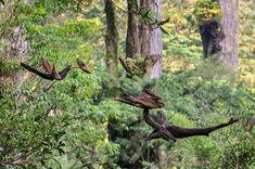 2010年流木オブジェー14  ★  #流木オブジェ #流木 #流木アート #屋久島アート #インテリア #Driftwood Art #Interior #流木の鳥