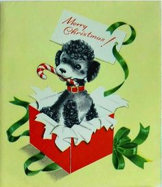 Poodle pops out for Christmas.
