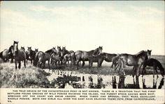 Chincoteague Ponies Virginia