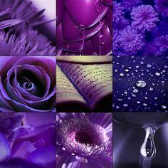 Nature In Purple Collage
