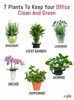 #houseplants #indoorplants