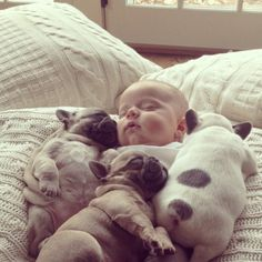 Four fat little babies!