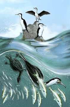 Pied Shags by Ned Barraud Wellington New Zealand, Wild Creatures, Like Animals, Book Authors, Book Publishing, Childrens Books, Whale, Illustration Art, Birds