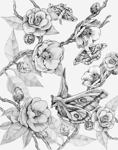 Moths & Camellias Canvas Print