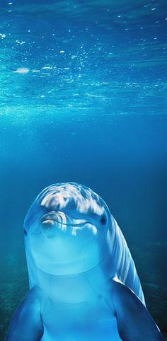 About Wild Animals: A dolphin underwater