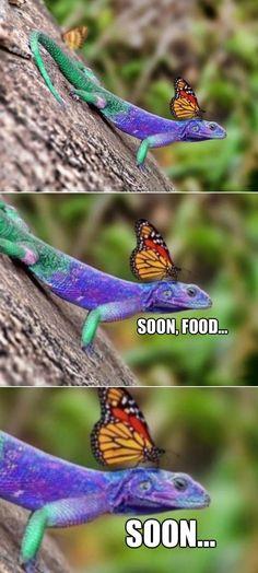 Fabulous lizard www meme lol com more