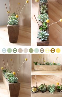 Make Something Mondays {succulent planter} i really like succulents - plus they are an eco friendly plant since don't require a lot of water and no chemicals or pesticides - plus i think this wooden piece makes a cool display