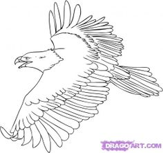 how to draw eagles | how to draw eagles