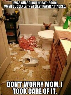 """""""I was guarding the bathroom when it just blew up... Don't worry Mom, I took care of it."""" Naughty German Shepherd puppy. Too cute.~ Dog Shaming shame"""