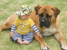 South African Boerboel Puppies Archives - American Bully And ...