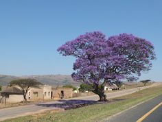 On the road to St Lucia, South Africa | One Footprint On The World