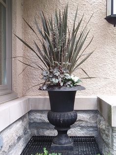 architectural plants and containers | photo