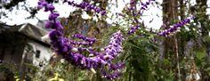Bientôt mi-décembre et encore des floraisons inhabituelles… Décembre peu banal, des penstemon refleurissent, les tulipes sortent, les sauges fleurissent encore,quelques gelées matinales et pourtant ...             http://www.mybnb.fr/bientot-mi-decembre-et-encore-des-floraisons-inhabituelles  admincda73