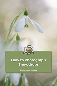 Snowdrops are only around for a short time. Learn how to photograph these delicate flowers in this macro and landscape photography tutorial. Macro Photography Tips, Landscape Photography Tips, Photography Tips For Beginners, Underwater Photography, Photography Tutorials, Photography Photos, Travel Photography, Photo Processing, The Fragile