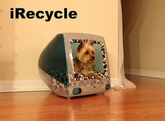 Do you like my house?  i Recycle. Every man can king be king in his castle. Every yorkie can be a star!
