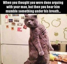 Do you love funny cat memes? Cats are funny animals. Check our pa - Funny Cat Quotes Funny Shit, Funny Animal Memes, Funny Cats, Funny Animals, Hilarious, Funny Humor, Funny Memes For Kids, Memes Humor, Funny Pictures Can't Stop Laughing